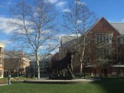 The Campus Bull
